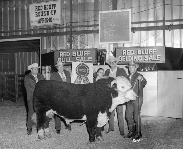Celebrating 80 Years of the Red Bluff Bull & Gelding Sale