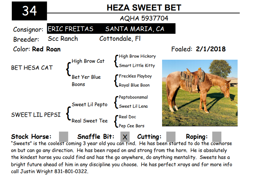 Lot 34 - HEZA SWEET BET