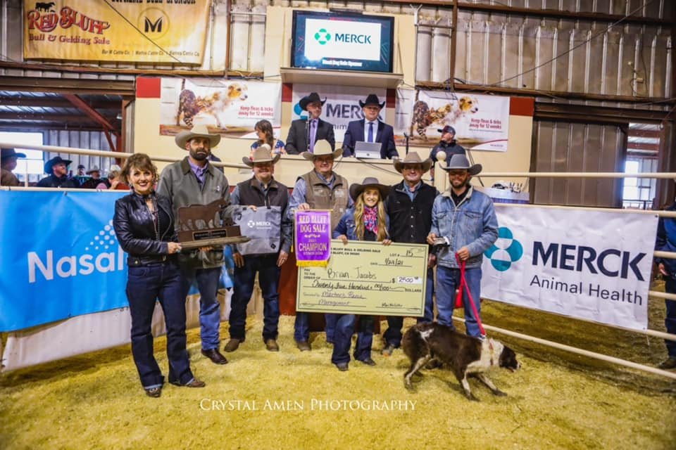 2020 Champion Stock Dog Lot #8 MISR Cat