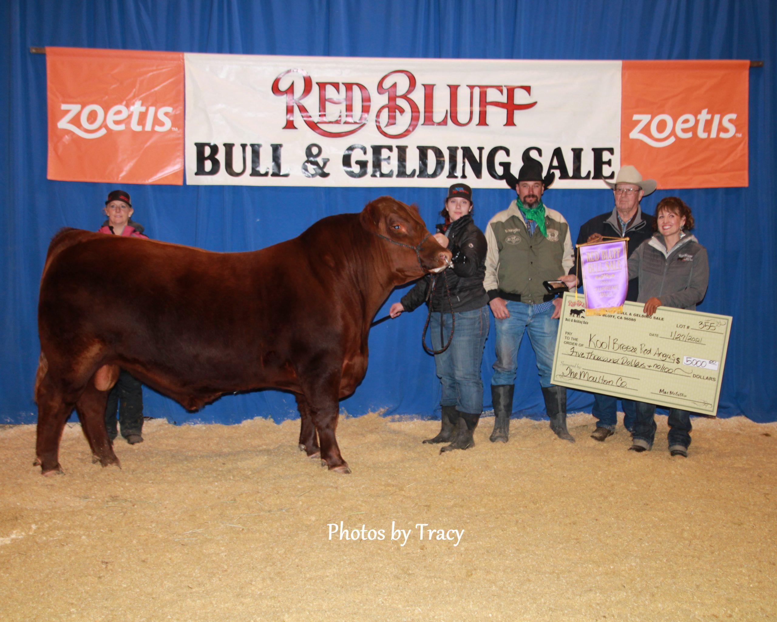 2020 Supreme Bull - Lot #296 ER 5186 DOMINO 728